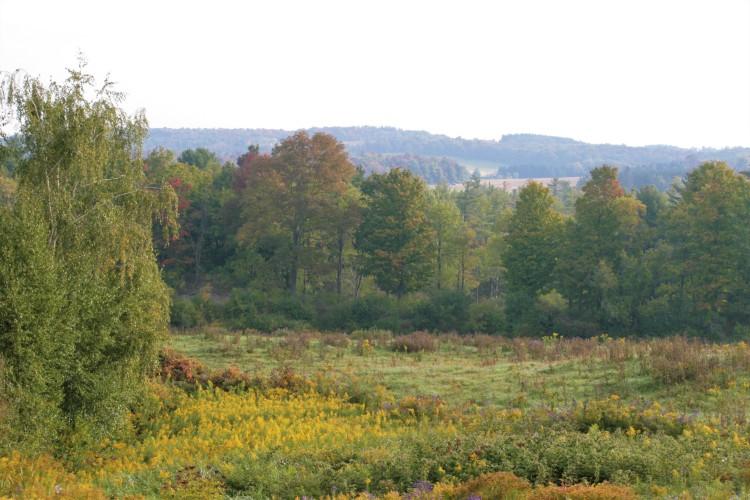 Landscape of Cedar Swamp Homestead