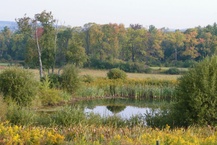 The pond view at Cedar Swamp Homestead in Erieville, NY
