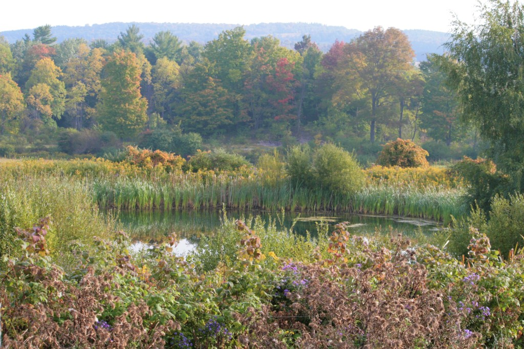 The pond at Cedar Swamp Homestead in the Town of Nelson in Central New York