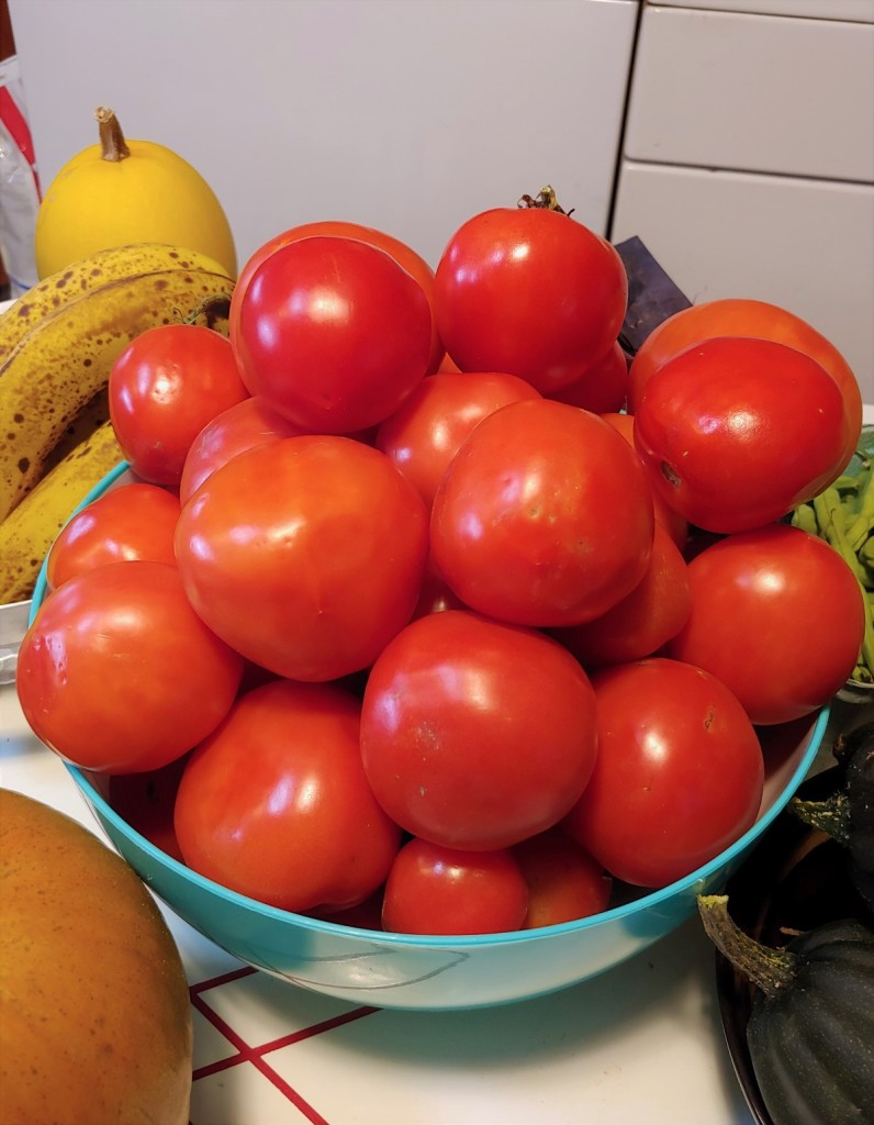 Large bowl of ripe tomatoes from the garden.