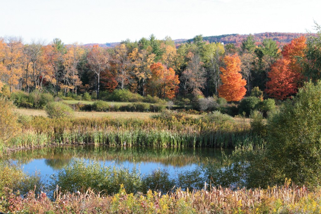 Cedar Swamp Homestead pond in October with fall foliage